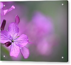 Acrylic Print featuring the photograph Caring by The Art Of Marilyn Ridoutt-Greene