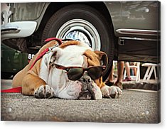 Carmel Cool Dog Acrylic Print