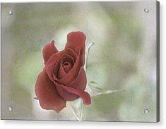 Acrylic Print featuring the photograph Carmen by Elaine Teague