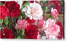 Carnation Cluster Acrylic Print