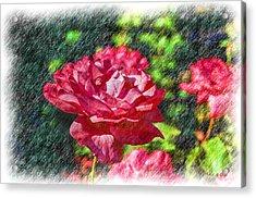 Carnation Acrylic Print