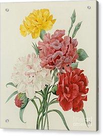 Carnations From Choix Des Plus Belles Fleures Acrylic Print