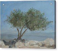 Carob Tree On Mt. Arbel  Acrylic Print by Rita Adams