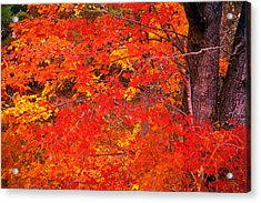 Carolina Autumn Acrylic Print by Marion Johnson