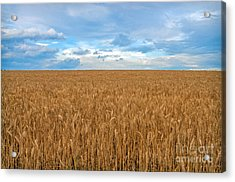 Carolina Wheat Field Acrylic Print by Marion Johnson