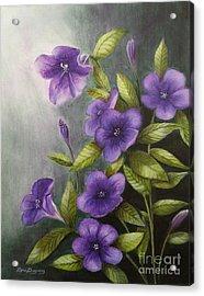 Carolina Wild Petunia Ruellia Caroliniensis Acrylic Print