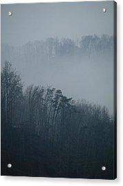 Carolina Winter #1 Acrylic Print
