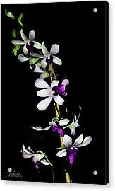 Carol's Orchid Acrylic Print