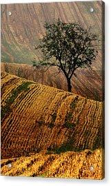 Carpet Fields Of Moravia Acrylic Print by Jaroslaw Blaminsky