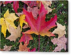 Acrylic Print featuring the photograph Carpet Of Colour by Maria Janicki