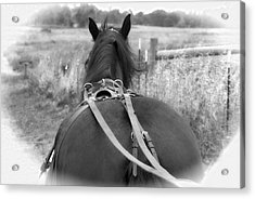 Carraige View Horse Acrylic Print