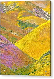 Carrizo Wildflowers Vertical Acrylic Print by Marc Crumpler