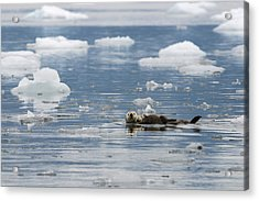 Carry Me Acrylic Print by Ted Raynor