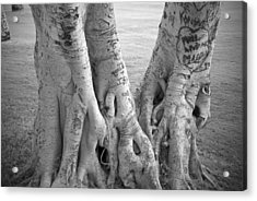 Carved Roots Acrylic Print by Chris Ann Wiggins