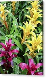 Cascade Garden Acrylic Print