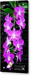 Acrylic Print featuring the photograph Cascading Orchids by Sue Melvin