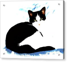 Acrylic Print featuring the digital art Casey by Dale   Ford