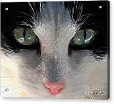 Acrylic Print featuring the photograph Casey Eyes by Dale   Ford