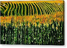 Cash Crop Corn Acrylic Print by Gregory Allen Page