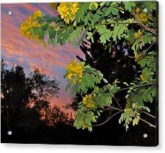 Casia Sunrise Acrylic Print