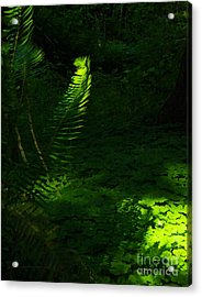 Casting Light Acrylic Print by Tim Rice