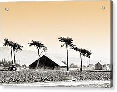 Castroville Farming Acrylic Print