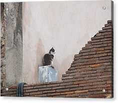 Acrylic Print featuring the photograph Cat Above The Roman Ruins by Tiffany Erdman