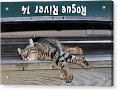 Cat And A Canoe Acrylic Print by Susan Leggett