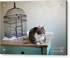 Cat And Bird Cage Acrylic Print by Nailia Schwarz