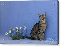 Cat And Flowers In Greece Acrylic Print by Jean-Louis Klein and Marie-Luce Hubert