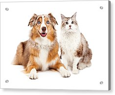 Cat And Happy Dog Together Acrylic Print by Susan Schmitz