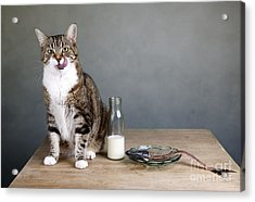 Cat And Herring Acrylic Print by Nailia Schwarz