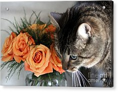 Cat And Roses Acrylic Print by Yumi Johnson