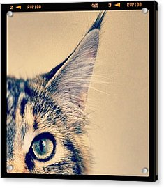 #cat #animal #cute #adorable #kitten Acrylic Print