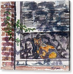 Cat Behind The Screen Acrylic Print by Julie Maas