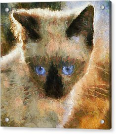 Cat Blue Eyes Acrylic Print by Yury Malkov