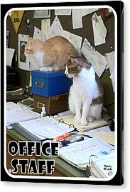 Acrylic Print featuring the photograph Cat Business by Mary Beth Landis