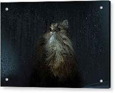 Cat By Rainy Window Acrylic Print by Benjamin Torode