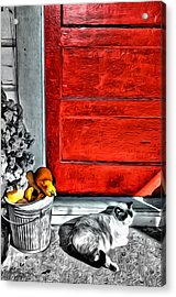 Cat By The Red Door Acrylic Print