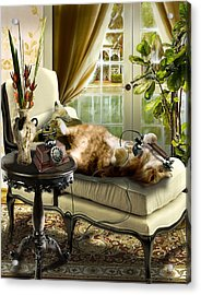 Funny Pet Talking On The Phone  Acrylic Print by Regina Femrite