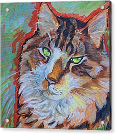 Cat Commission Acrylic Print by Jenn Cunningham