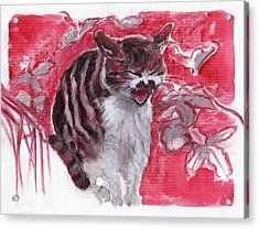 Cat Complains  Acrylic Print