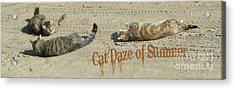 Cat Daze Of Summer Acrylic Print