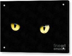 Cat Eyes Acrylic Print