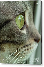 Cat Face Profile Acrylic Print by Amy Cicconi