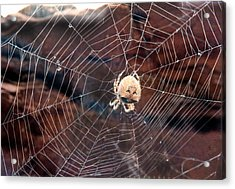 Cat Faced Spider Acrylic Print