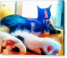 Cat Feet Acrylic Print by Derek Gedney