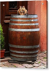 Cat Guarding A Wine Barrel In Alsace Acrylic Print by Greg Matchick