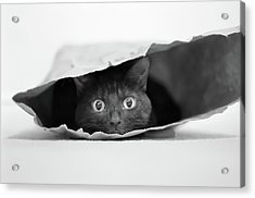 Cat In A Bag Acrylic Print