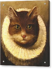 Cat In A Ruff Acrylic Print by Vintage Art